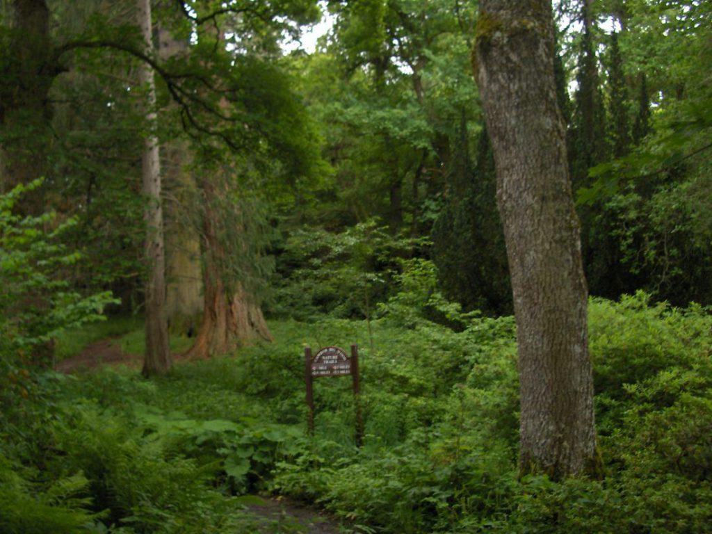 bosco e percorso a piedi