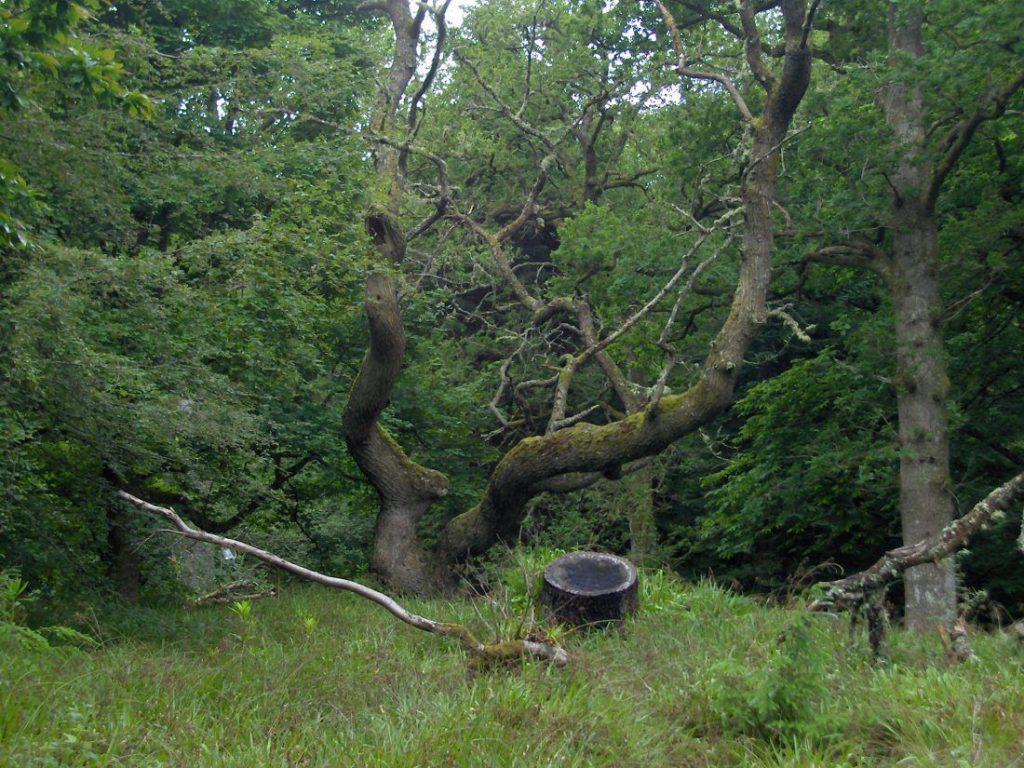 albero e bosco