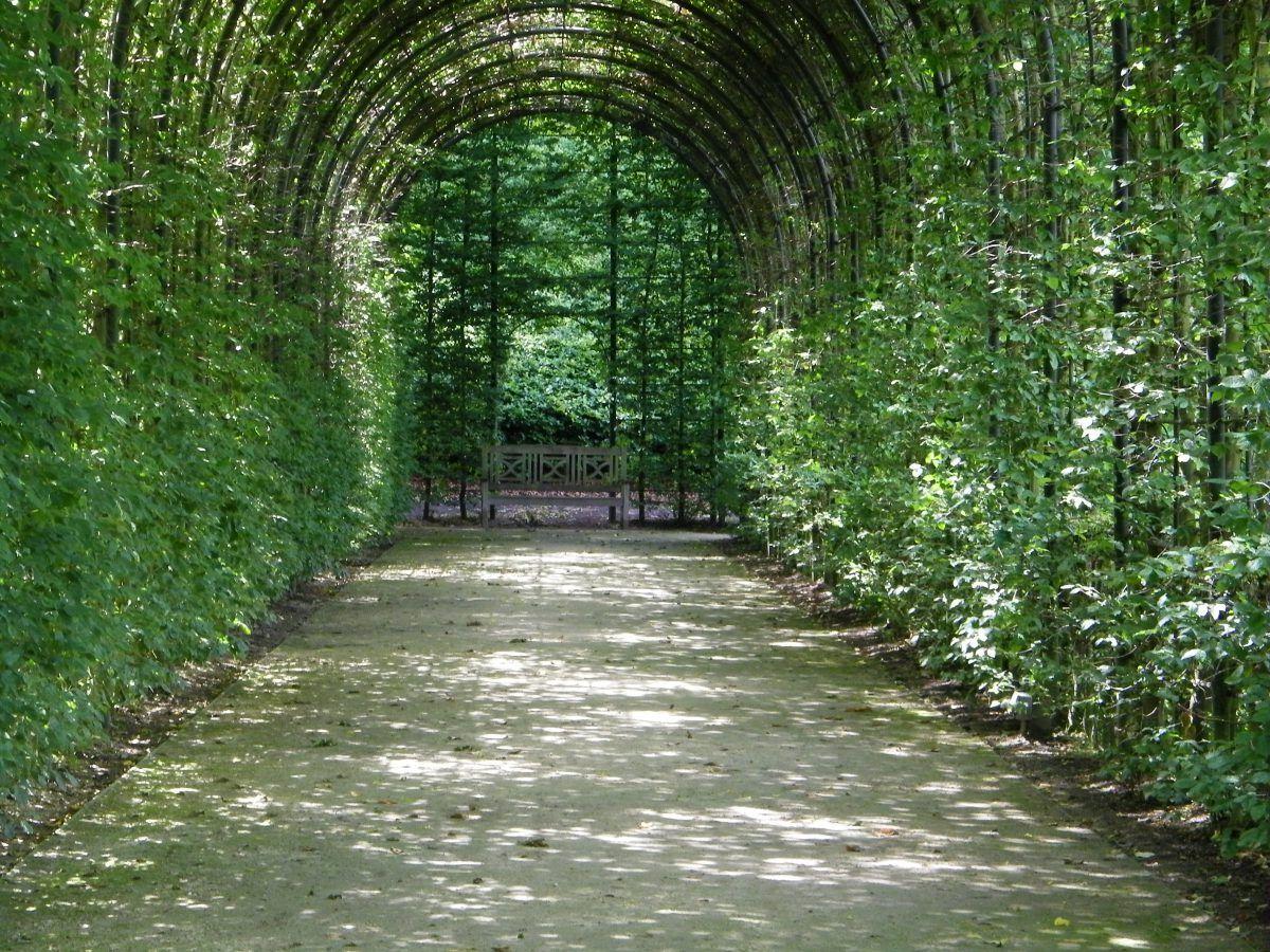 alnwick castle, viale con alberi