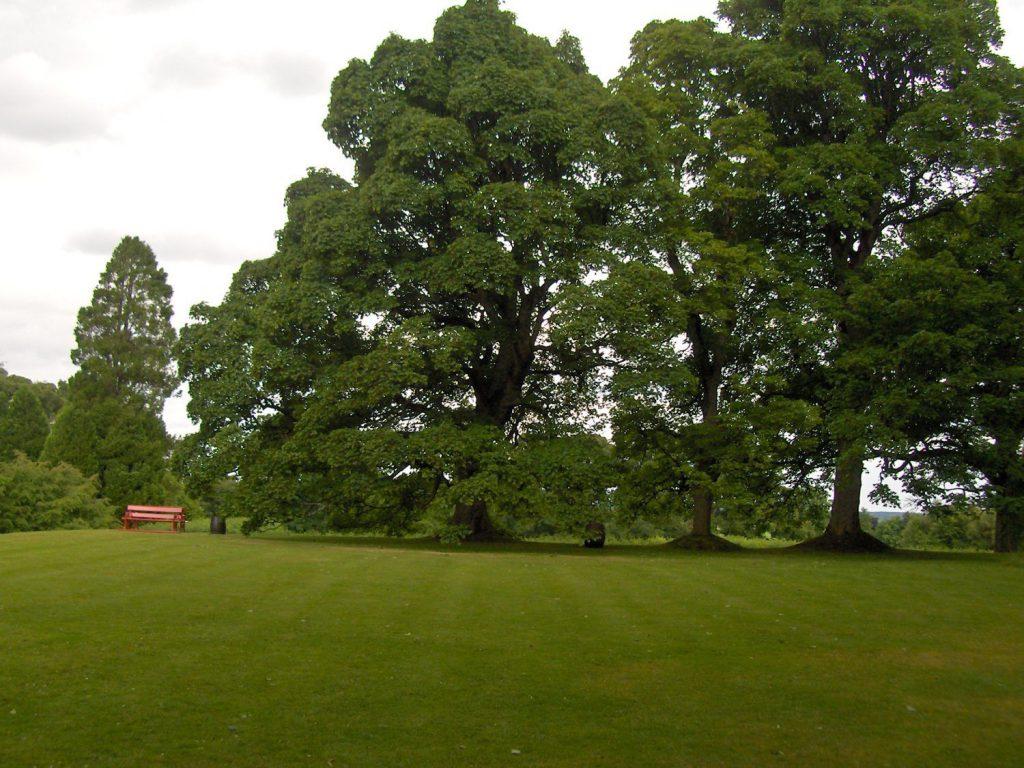 cawdor, panchina rossa, giardino e alberi