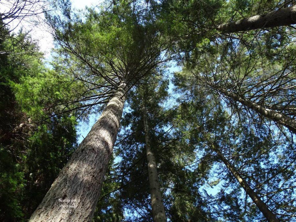 Dunkeld tra Cattedrale ed alberi secolari