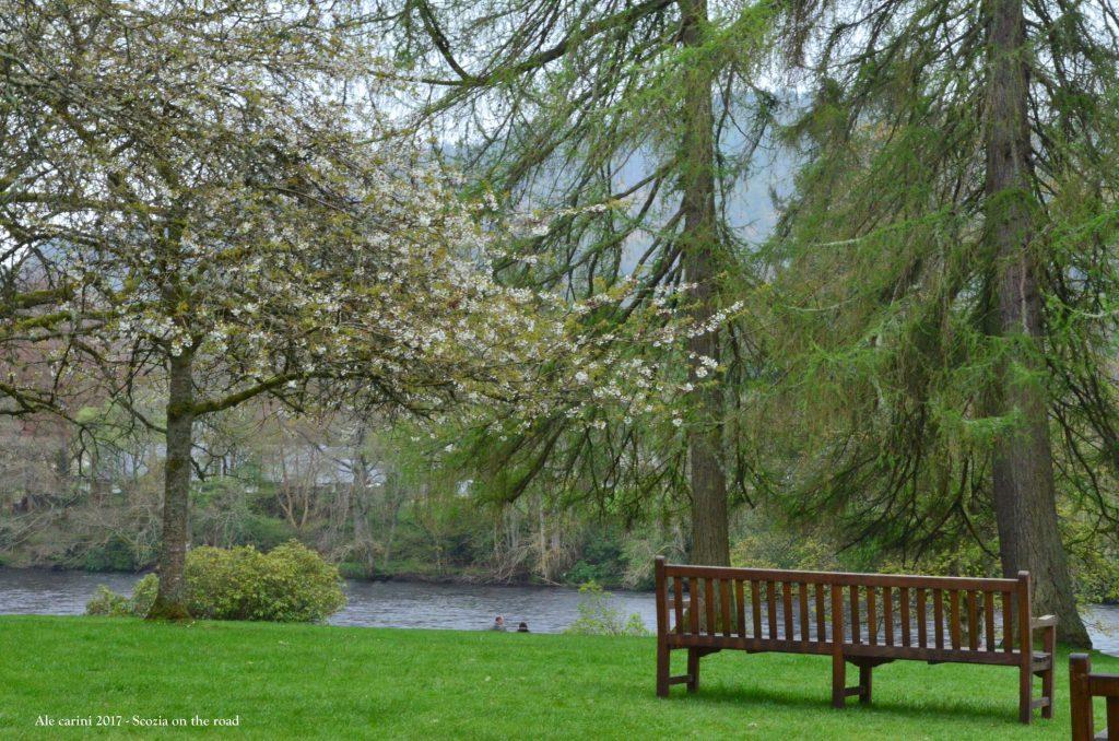 panchina in riva al fiume, alberi