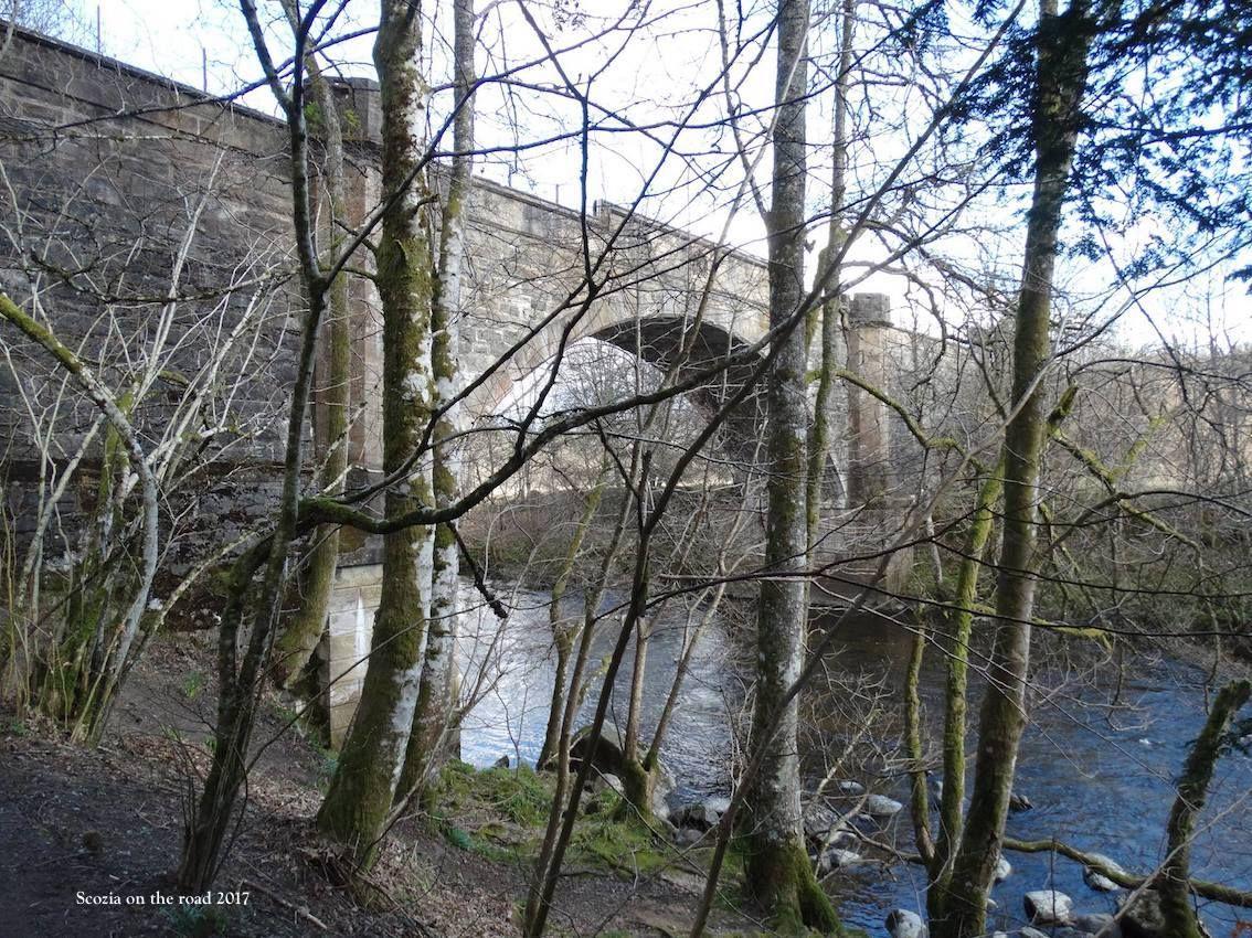 ponte, fiume, alberi