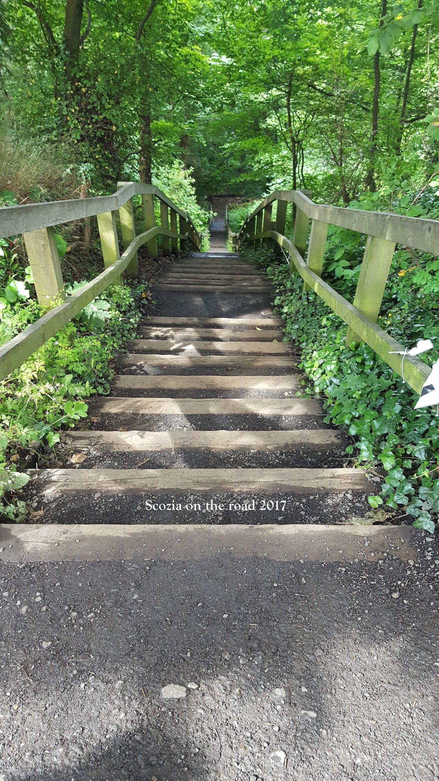 scalinata nel bosco a queensferry