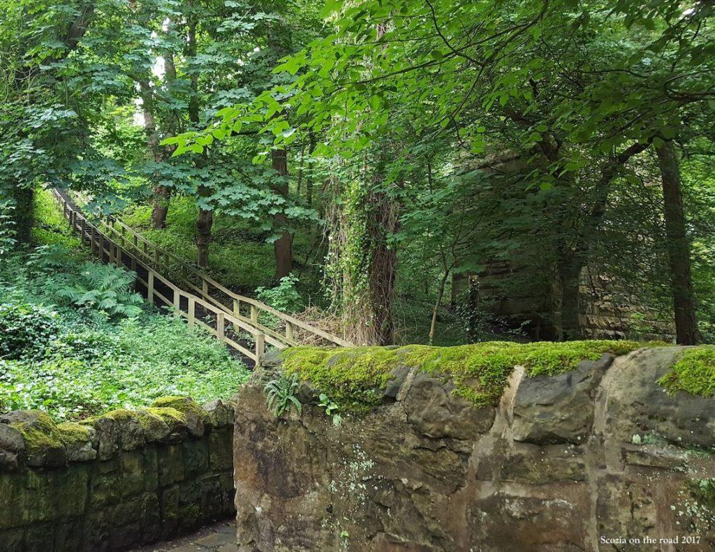 bosco, scale di legno e alberi