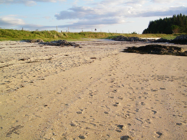 sabbia e erba
