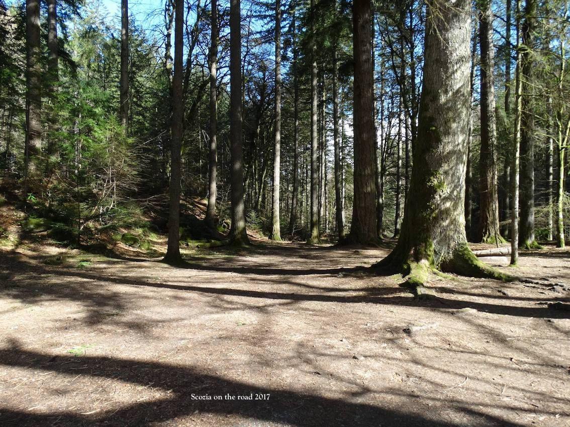 bosco, alberi