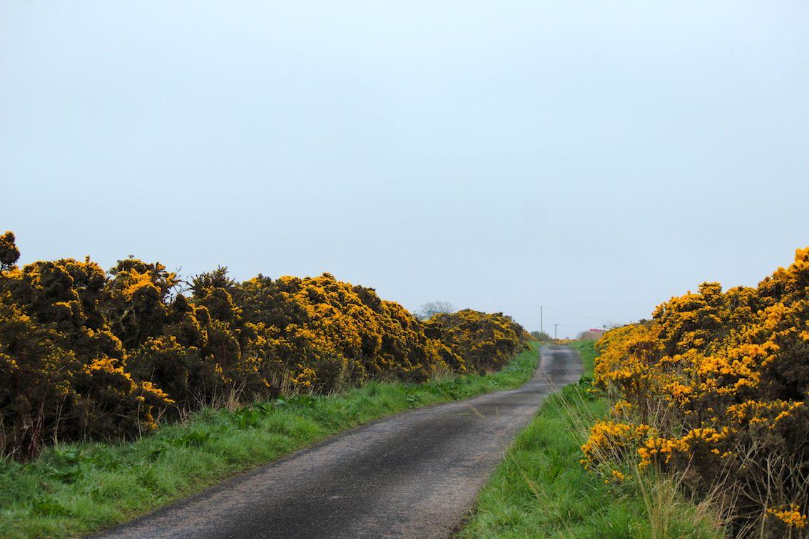 guidare in Scozia