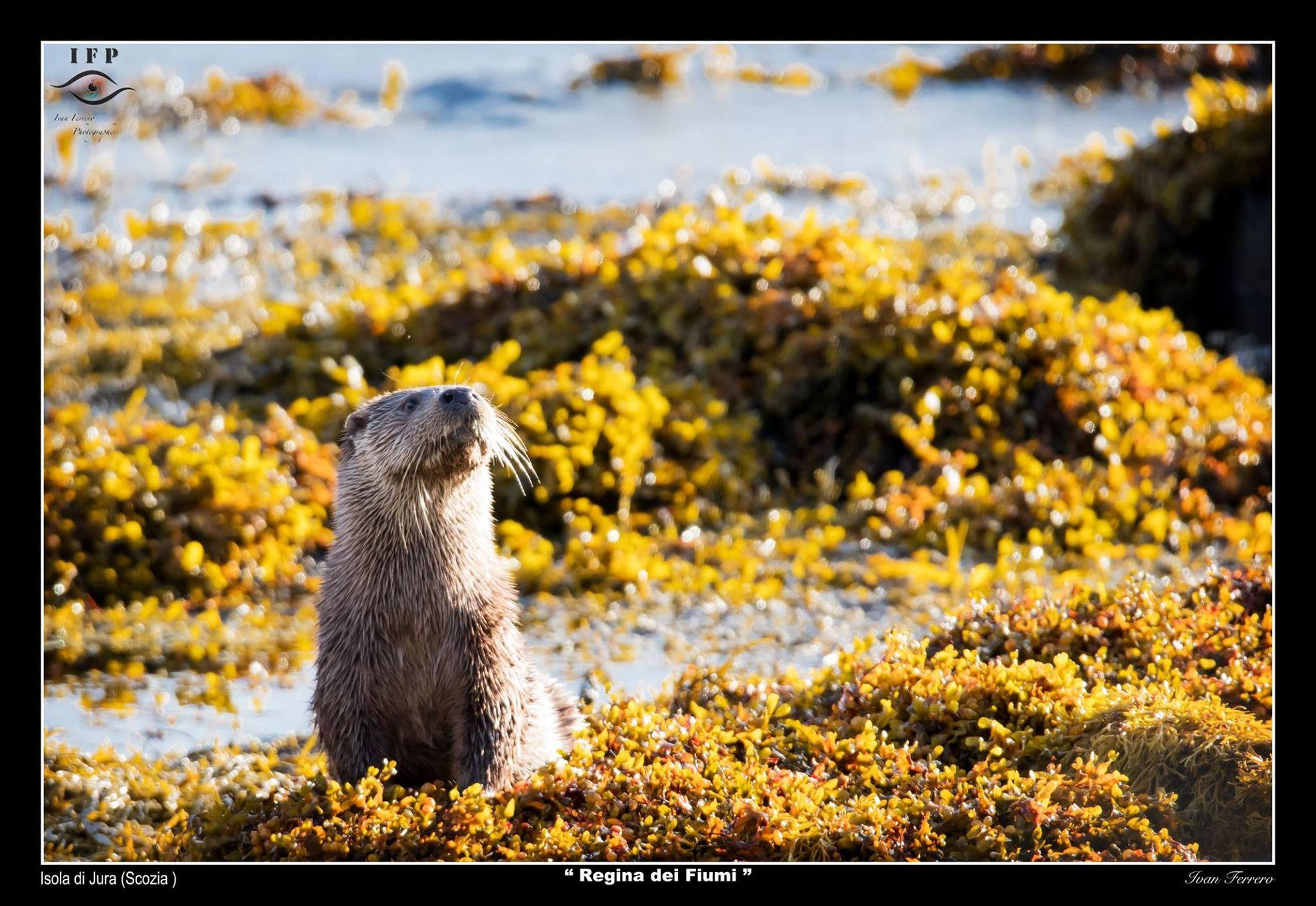 dove vedere gli animali selvaggi in Scozia - animali scozia
