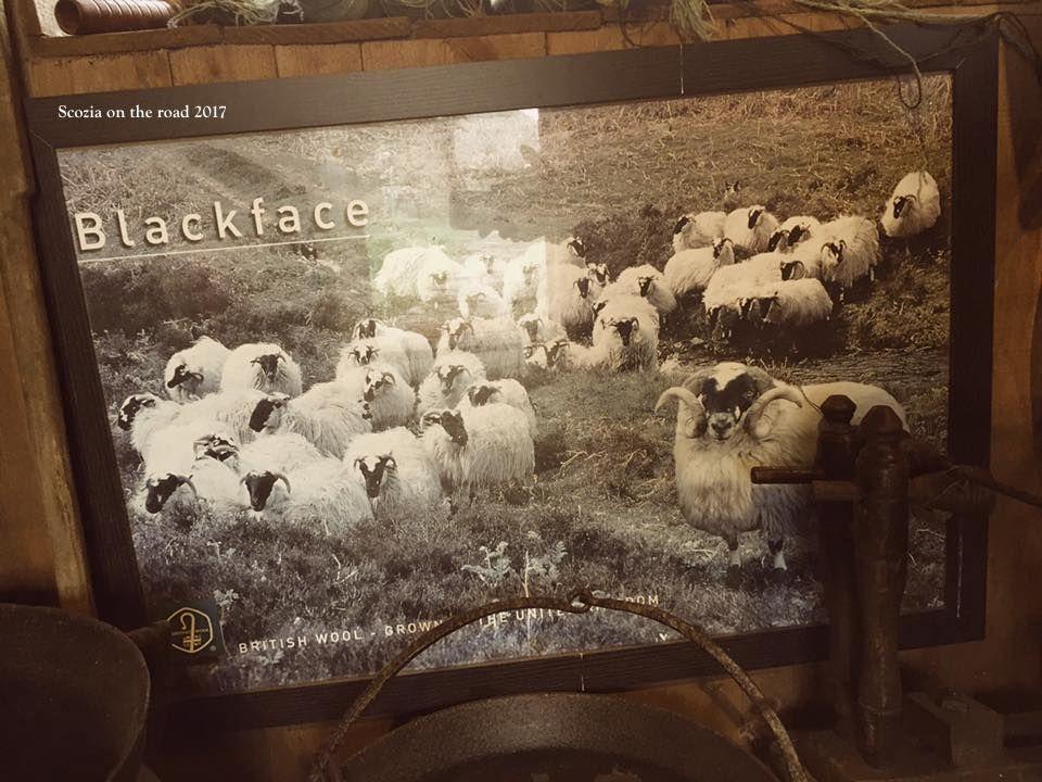 immagine di pecore