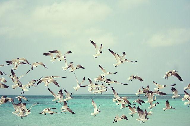seagulls-815304_640