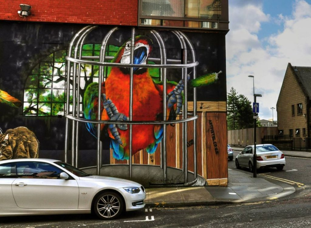 murales, pappagallo rosso