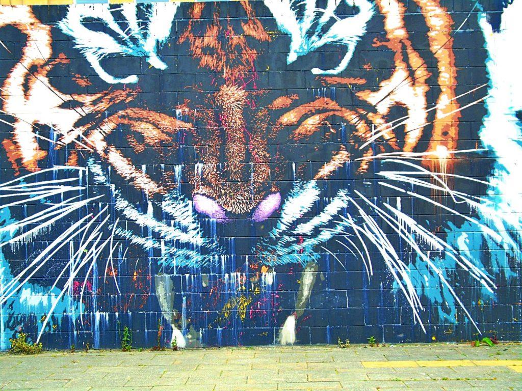 glasgow tigre