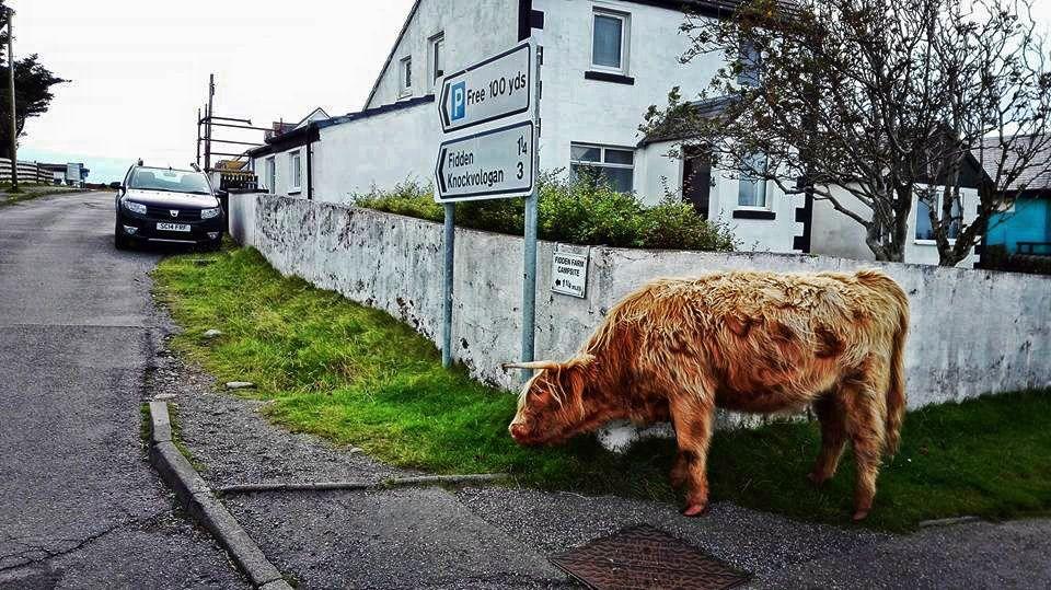 mucca, mull, strada