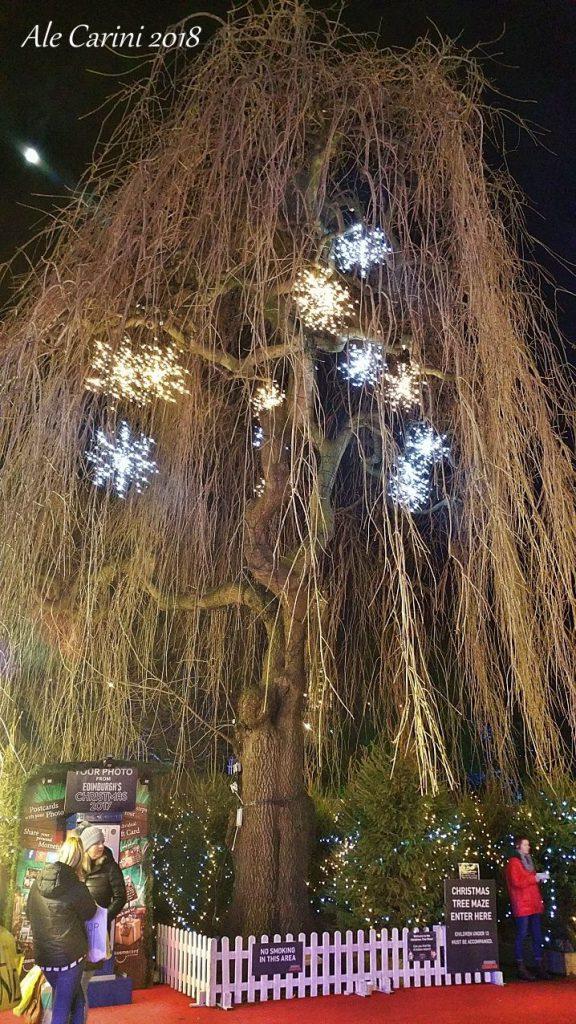 edimburgo, albero del labirinto