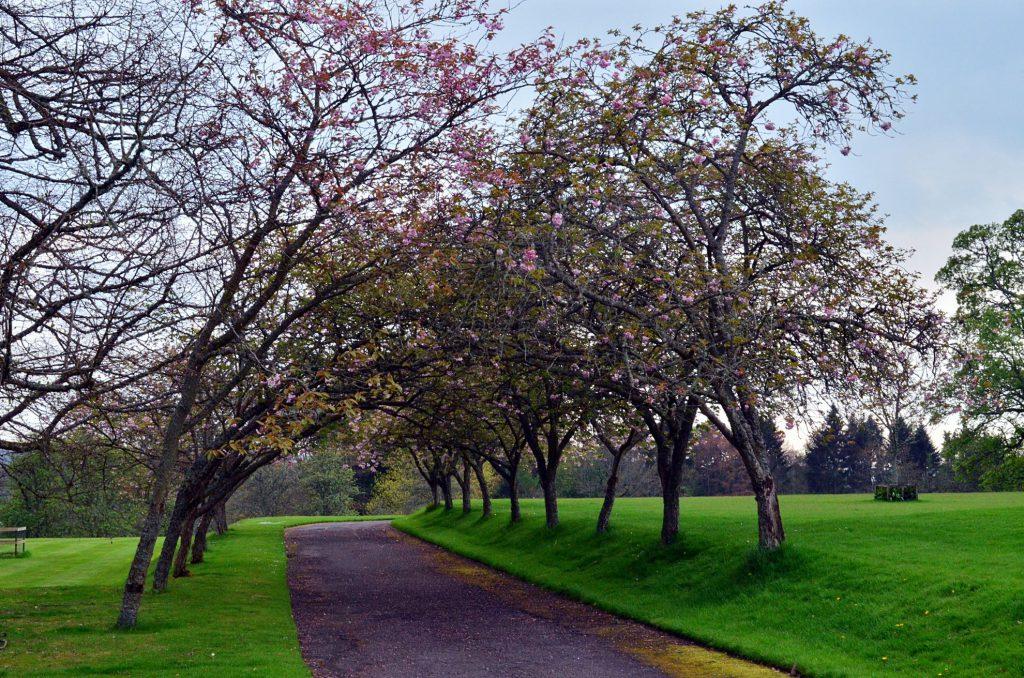 scone palace, giardini