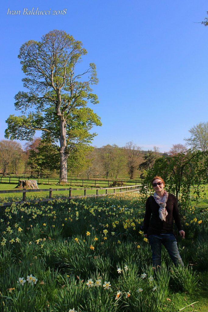 giardini in fiori lungo la via per il castello