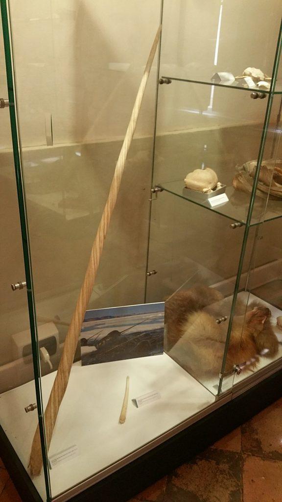 museo polare, fermo