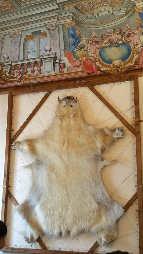 pelle d'orso