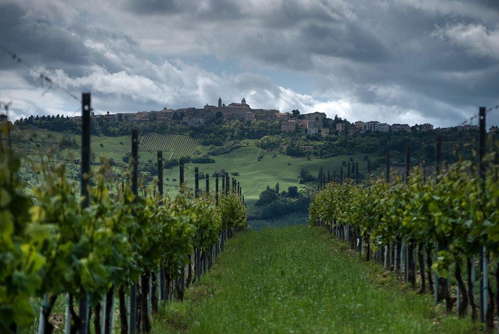 verdicchio viti cupramontana