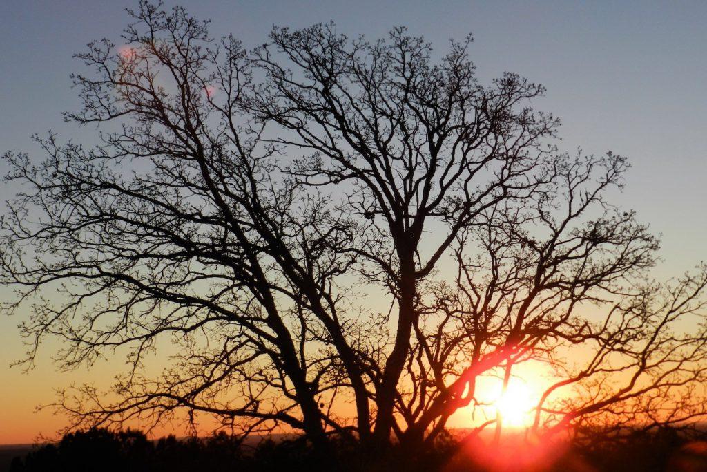 tramonto texano