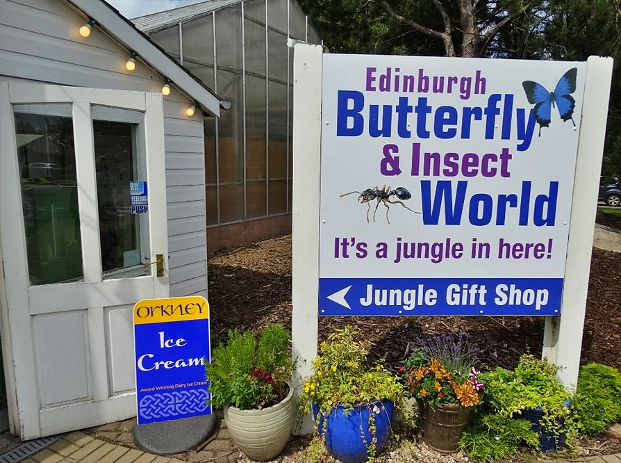 butterfly & insect world