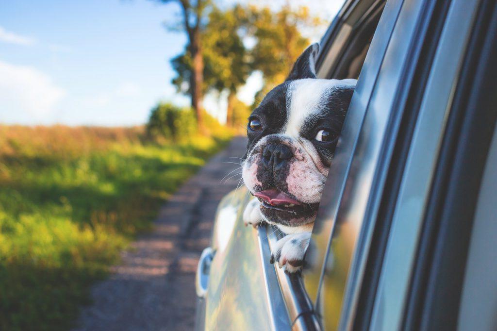 viaggiare in scozia con i cani