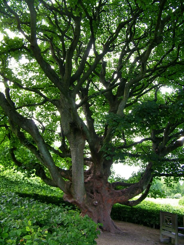 Alnwick castle, alberi nel giardino