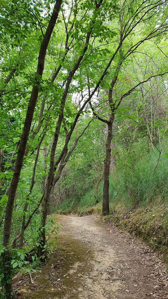 bosco del cugnolo