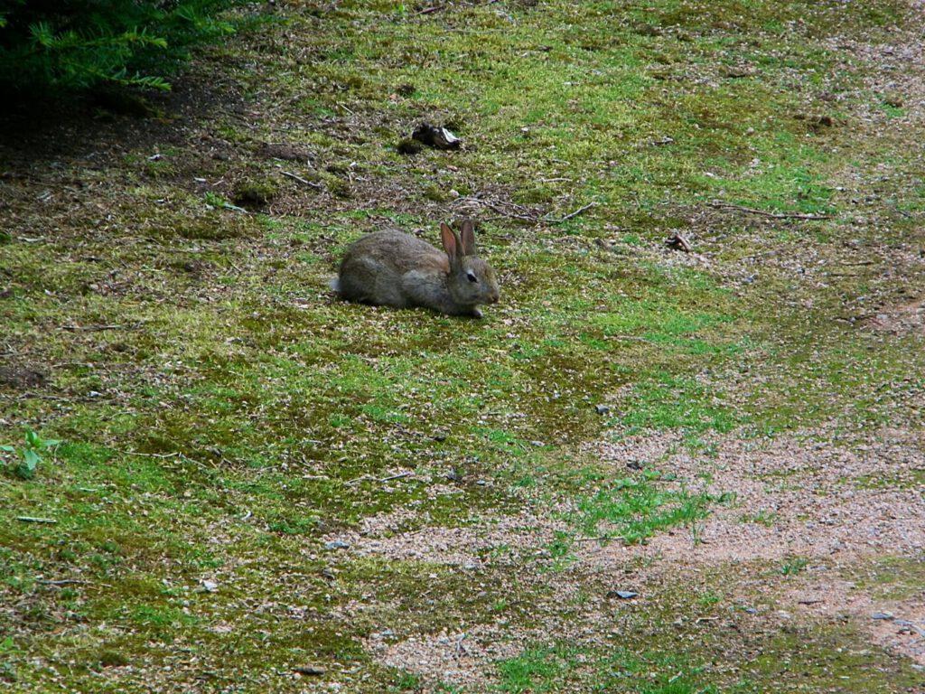 dove vedere conigli e lepri in scozia