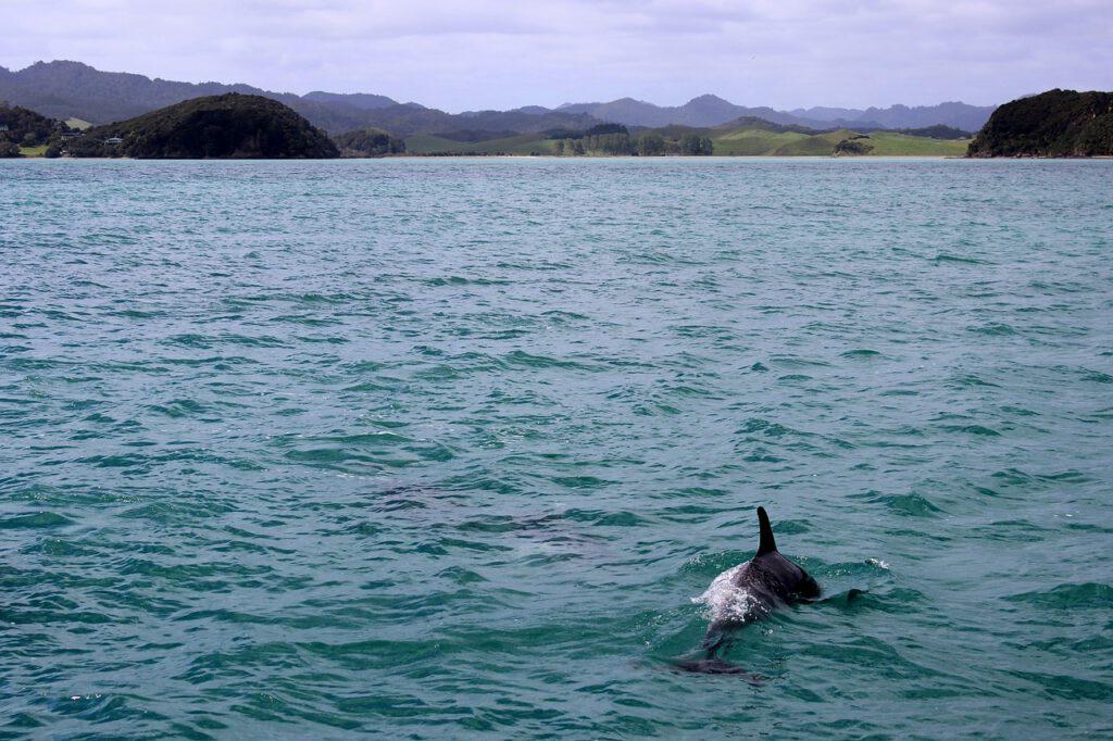 vedere i delfini in scozia, vedere gli animali in scozia, che animali ci sono in scozia