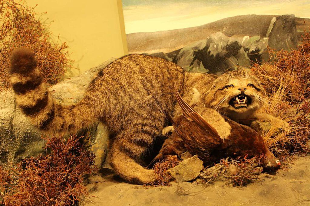 vedere gli animali in scozia, fauna scozzese