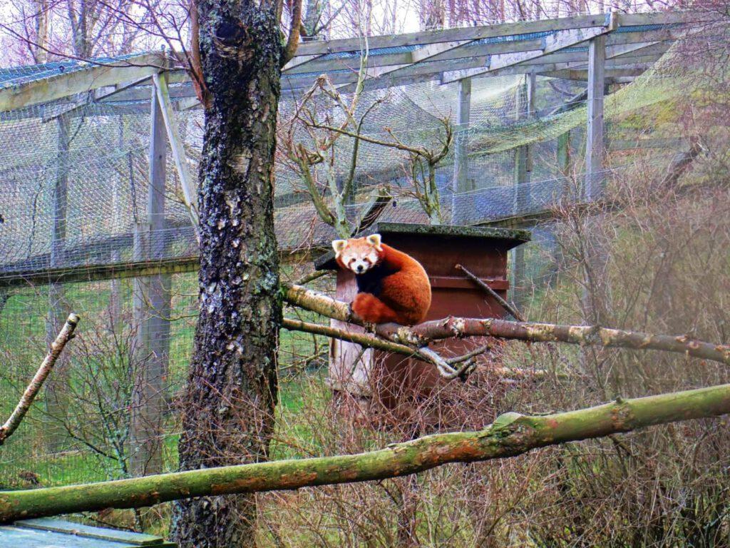 martora, quando vedere gli animali in scozia, fauna scozzese
