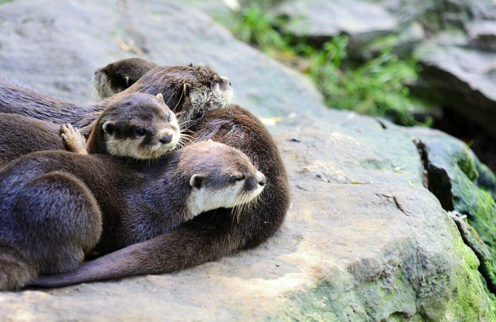 dove vedere le lontre in scozia, vedere gli animali in scozia