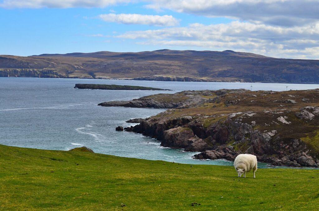 fauna scozzese, che animali si vedono in scozia