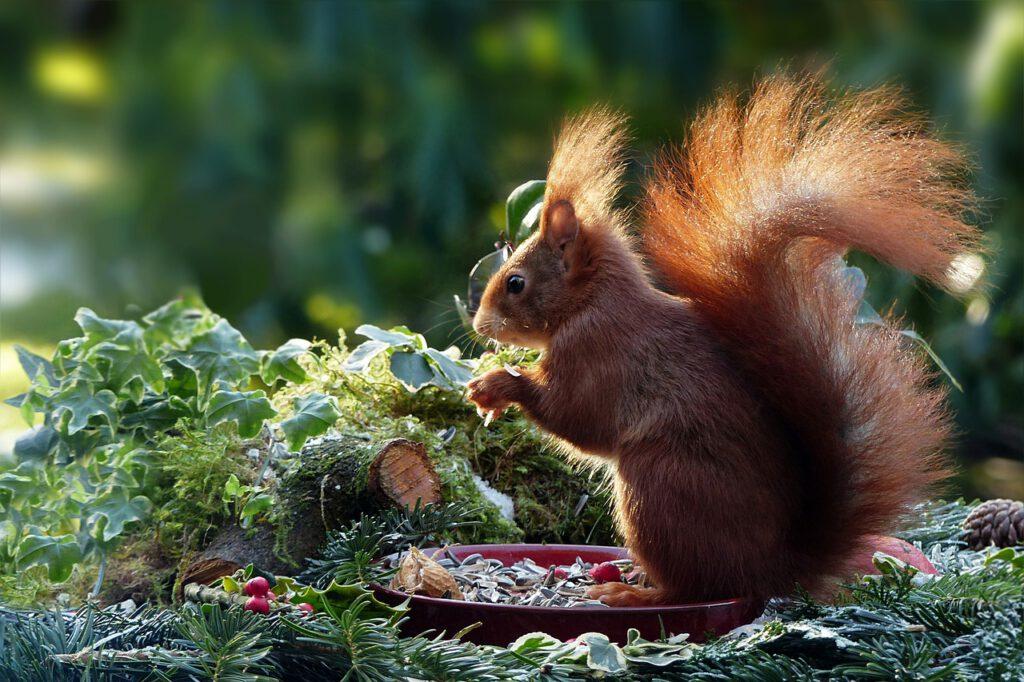 dove vedere gli scoiattoli in scozia, che animali si avvistano in scozia