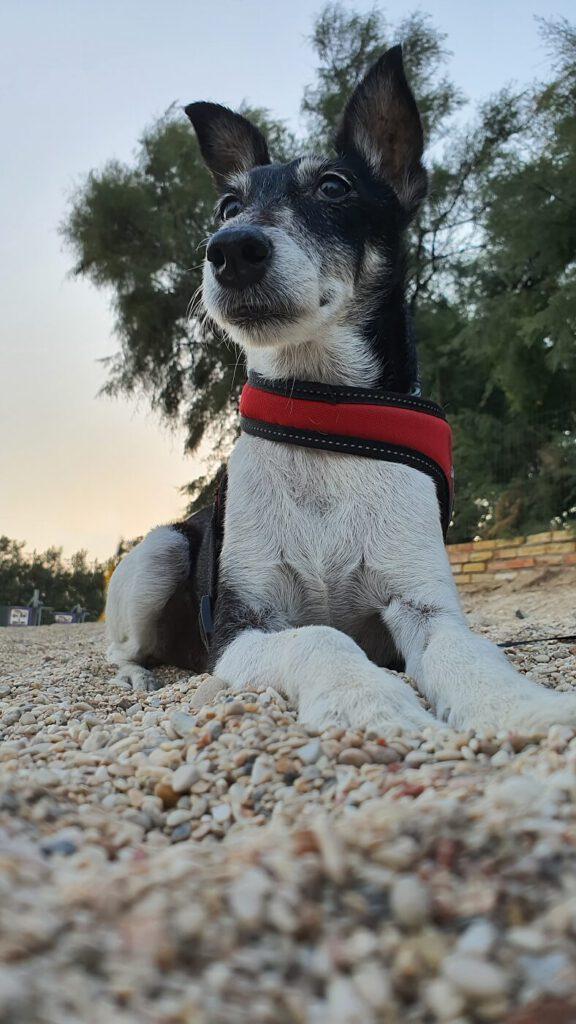 spiagge per cani marche, spiagga per cani marche, marche spiagge per cani