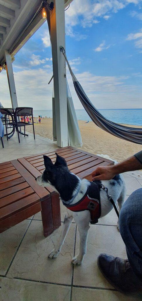 spiagge per cani marche, spiagge dog friendly marche