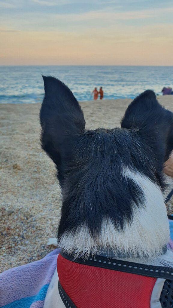 spiagge per cani marche, spiagga per cani marche, marche spiagge per cani, dove andare al mare con il cane nelle marche