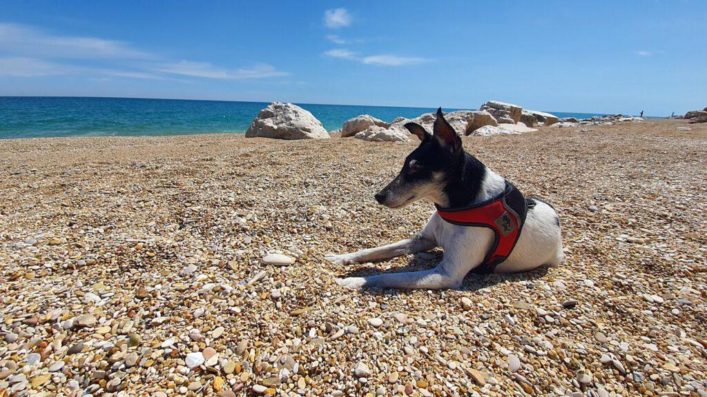 spiagga dog friendly marche, marche spiagge per cani