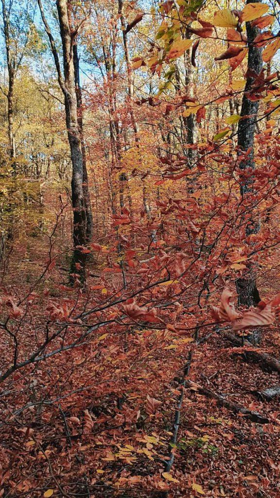 autunno, foliage marche