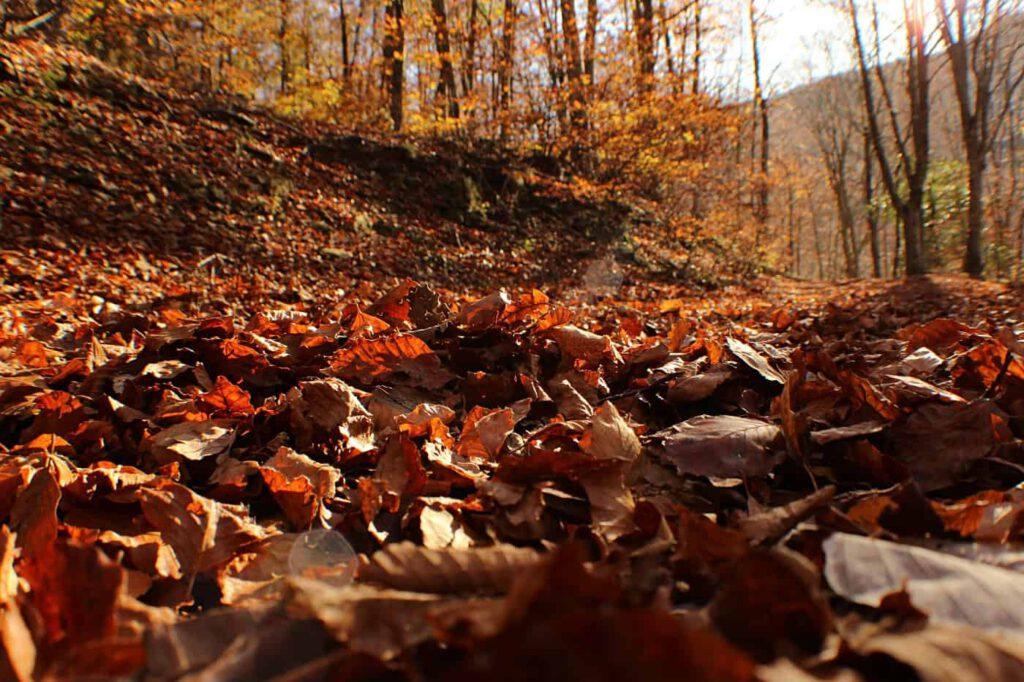 autunno, foliage autunnale,