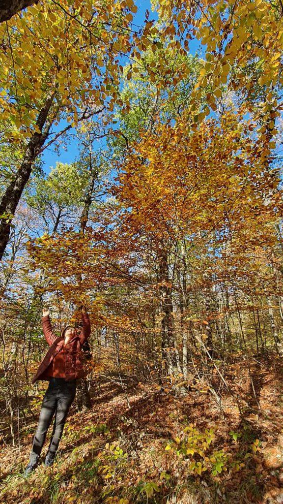 pian dell'elmo, foliage nelle marche